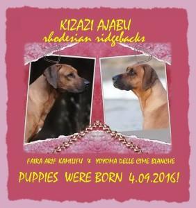 arifxyoyoma-pups-2016